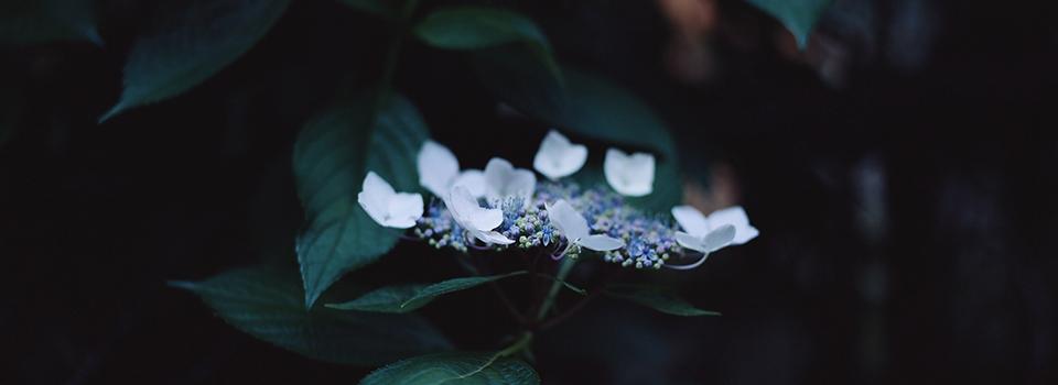 チャコールブルーの写真教室+出張撮影